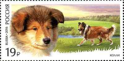 23 июня в рамках продолжения серии «Служебные породы собак» в почтовое обращение вышли две марки, посвящённые немецкой овчарке и колли